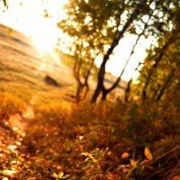 Утро в осеннем лесу =) :: Виктория Темникова