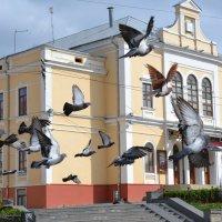 голуби на главной площади в Черновцах :: Ксения Волкова