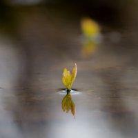 Из воды... :: Денис Антонов