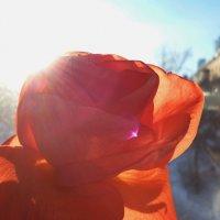 роза :: Женя Релье