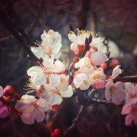 Весеннее настроение № 2 :: Мария Мухачева