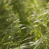 ...травы... :: Андрей Гр