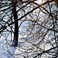 зима,зима,зима..... :: Татьяна Королёва