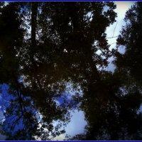 В луже отражается дерево и небо. :: Ольга Кривых