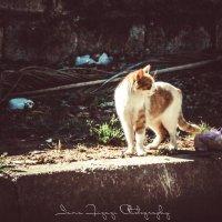 Нелегкая кошачья жизнь :: Yana Fizazi