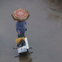 дождь :: Светлана Фомина