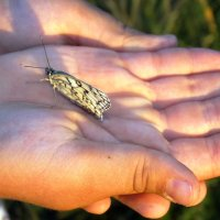 бабочка в ладошках :: Юлия Мошкова