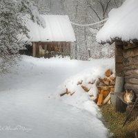 Зимний дворик :: Александр Морозов