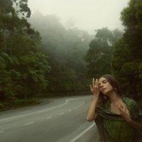 куда ведут мечты и дороги :: Светлана Ефимова