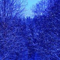 Снегопад в лесу. :: Анатолий Клепешнёв