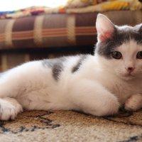 Берегите своих животных! Вот такого игривого котенка я потеряла навсегда! :: Nadezhda Ulitina