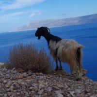 Коза на обрыве :: Юлия Тет