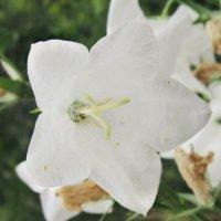 Квітка :: Алина Марцюга