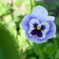 Весна :: Евгений Глухов