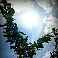 фото3 :: Лия Babrenok