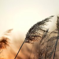 Солнечный ветер :: OLCEN Лен