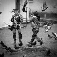 Кто кого загонял? :: Sergey Apinis