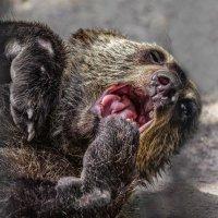 Бурый медвежонок :: Nn semonov_nn
