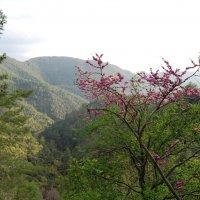 В горах Троодос. :: Нелли *
