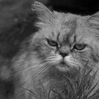 бродячий кот :: Ирина Рыкина