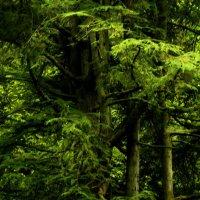 Здравствуй, лес, дремучий лес,  Полный сказок и чудес! :: Александр Корчемный