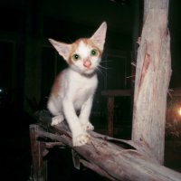 Смешной котенок :: Наталья Нарсеева