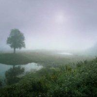 Туманное утро :: Валерий Талашов