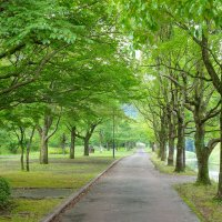 park :: Slava Hamamoto