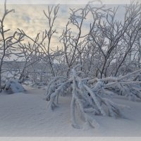 Зимний пейзаж. :: Николай Емелин