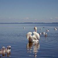 Птичий мир Куршского залива :: Elena Barkhatova