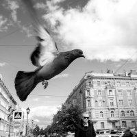 Голубь :: Александр Максимов