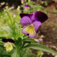 Цветчек :: Дарья Блоха