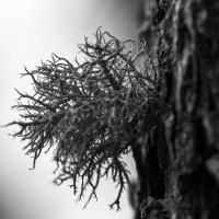 Так и жили себе дерево и мох :: Денис Антонов