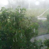 Дождливое лето. :: Харис Шахмаметьев