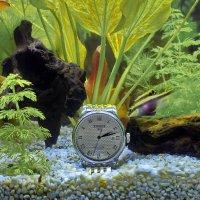 реклама часов...... :: Игорь 74