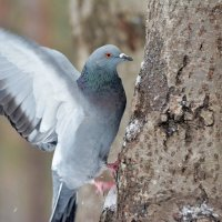 учусь на дятла) :: linnud