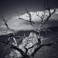 тысячелетний пейзаж :: Arman