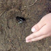 Про бабочек :: Нина Алексеева
