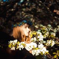 Яблоневый сад :: Анна Mэдисон