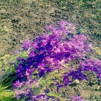 Полевые цветы :: Альбина Делик