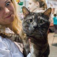Что кот, что хозяйка :: Валентина Крылова