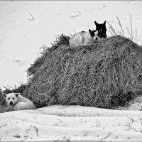 собака на сене :: Сергей Демянюк