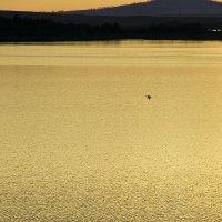 золотое озеро :: Arman