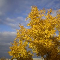 Золотая осень :: Лариса Рогова