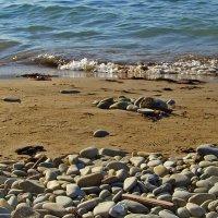 Море, море... :: Светлана Мещан