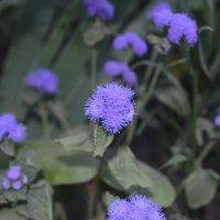 Цветок 3 :: Юля