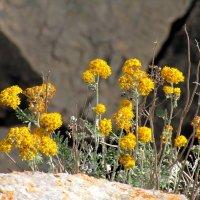И на камнях растут цветы :: Marina Timoveewa