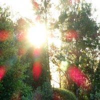 Утро просыпается с рассветом... :: Владимир Гилясев