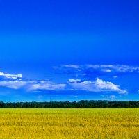 Небо и поле :: Сергей