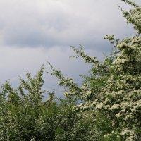 Перед грозой :: валерий